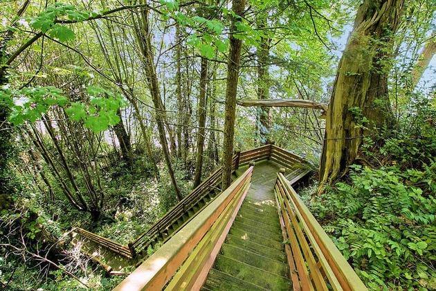 Огромная лестница из древесины ведет вас через лес вниз в долину